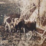 Patro: la trebbiatura e i lavori in campagna